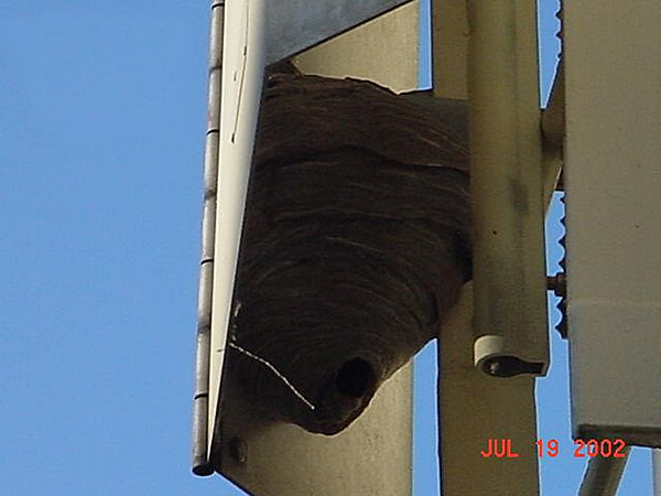 Hornets nest behind a microwave antenna in Decatur, Georgia